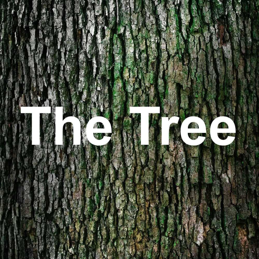 The Tree: die neue Komposition für Gitarre von Andreas Hövelmann