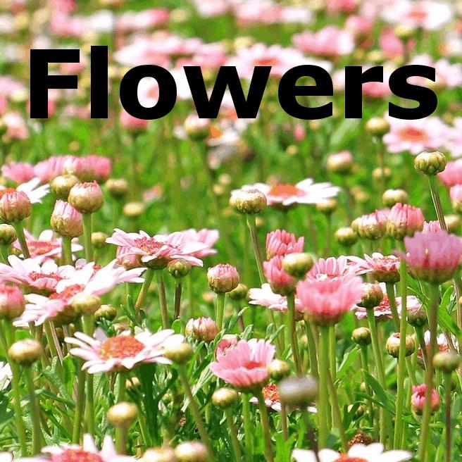Flowers -  für akustische Gitarre von Andreas Hövelmann